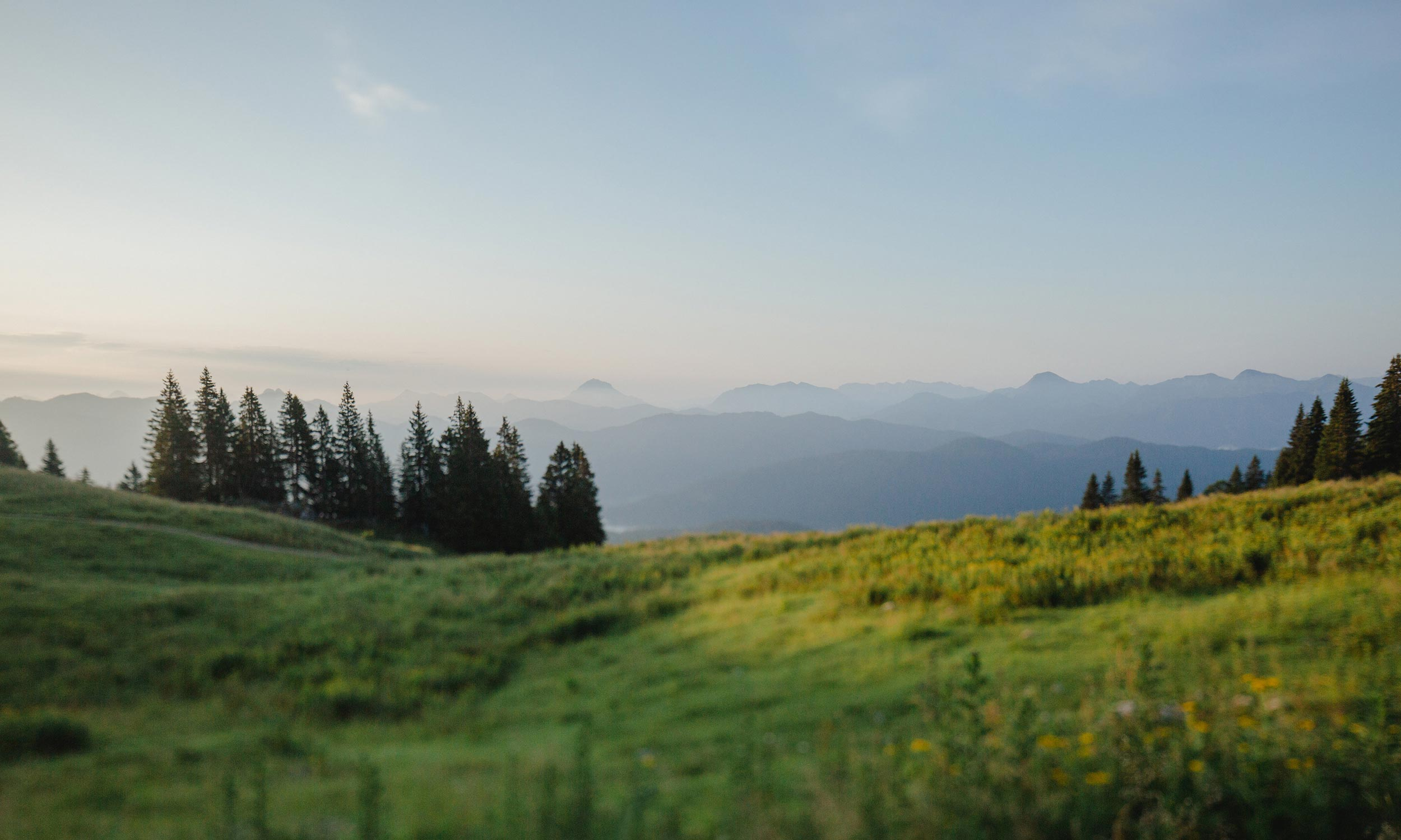 Almwiese mit Wald vor Bergkulisse