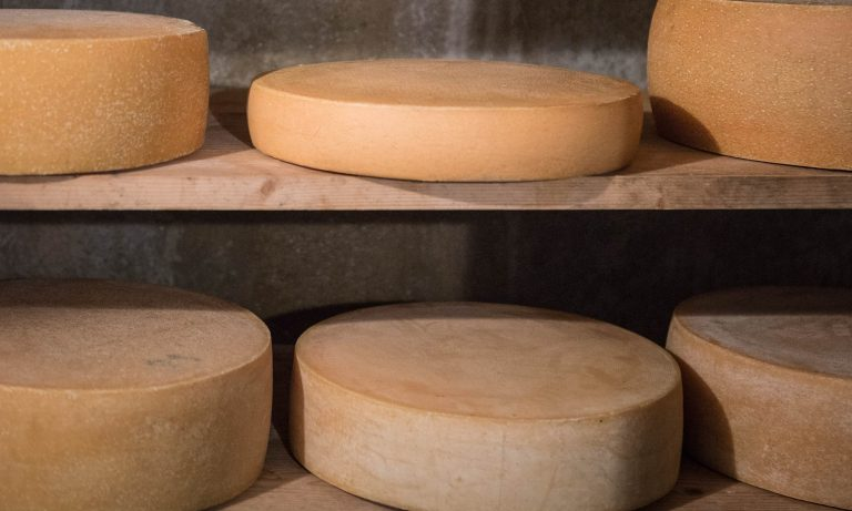Käseleibe im Holzregal beim reifen