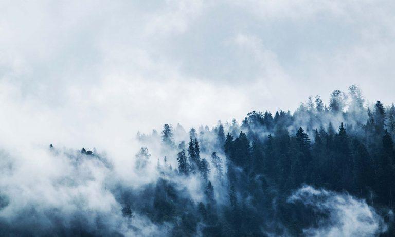 Bergwald in Nebenschwaden