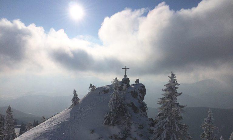 Steinbock und Gipfelkreuz in Winterlandschaft