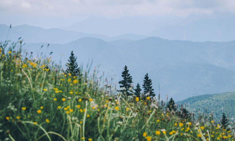 Almwiese mit Bergkulisse bei bedecktem Himmel